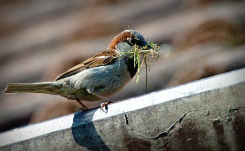 餌をくわえた小鳥