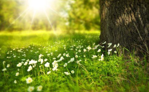 日差しの当たる木と花